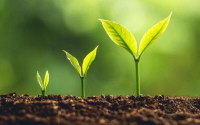 Better Financial Management, Better Growth